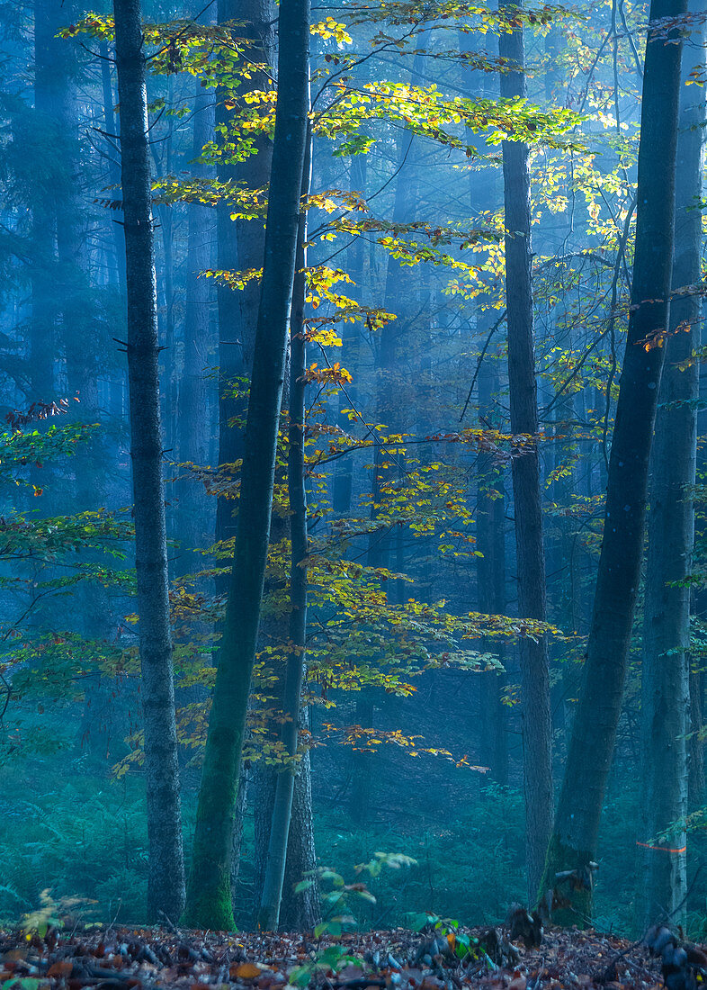 Autumn colors in the morning mist, Ostersee, Iffeldorf, Germany