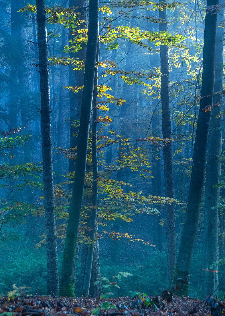 Herbstfärbung im Morgennebel, Ostersee, Iffeldorf, Deutschland