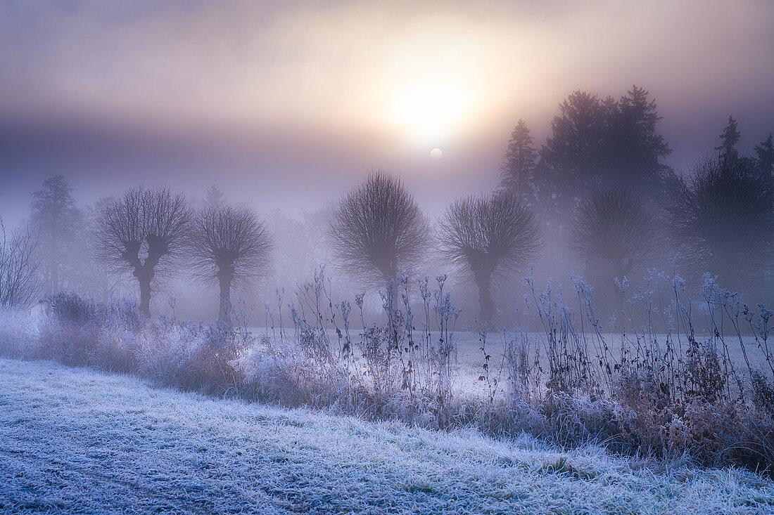 Morgennebel an einem frostigen Herbsttag, Tutzing, Bayern, Deutschland