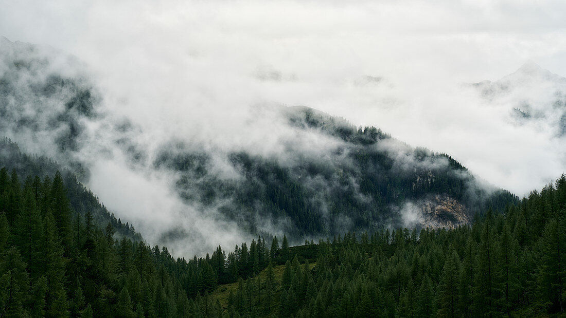 Foggy forest landscape in Giglachtal, Styria, Austria.