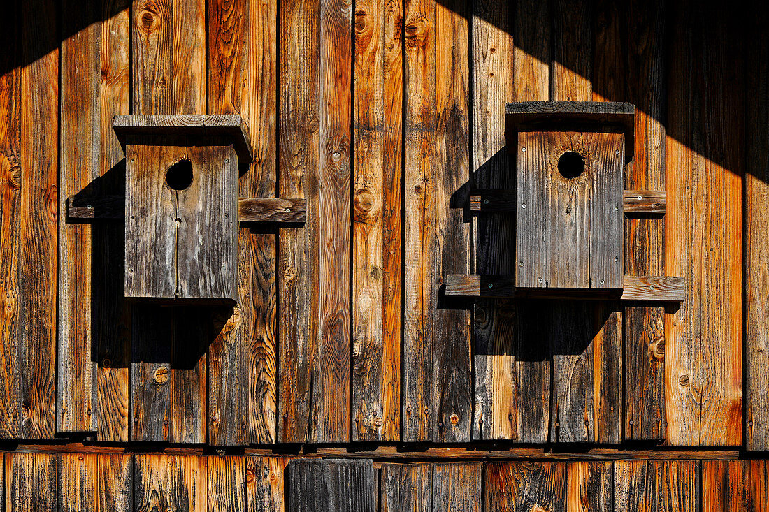 Two nest boxes, Bavaria, Germany, Europe