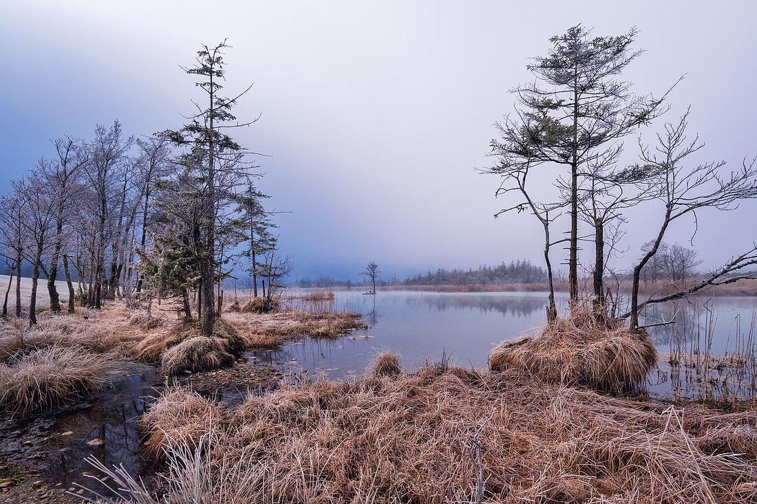 Winter morning near Eschenlohe, Garmisch-Partenkirchen district, Upper Bavaria, Bavaria, Germany, Europe