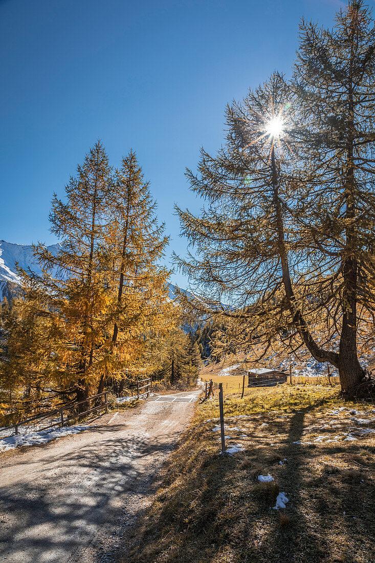 Weg durch den alten Lärchenwald im Ködnitztal, Kals am Großglockner , Osttirol, Tirol, Österreich