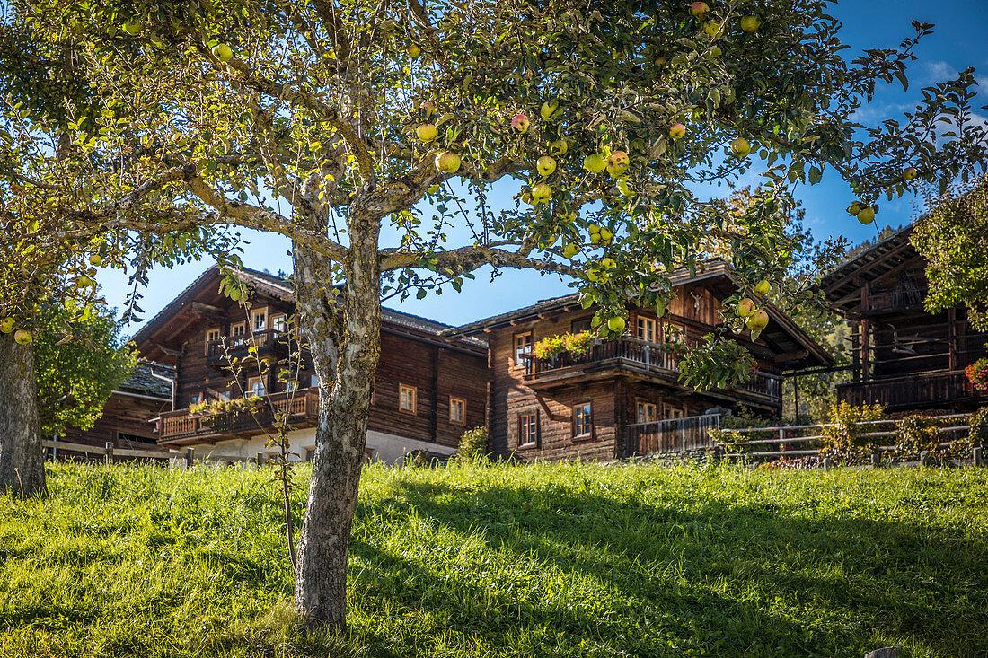 Obstgarten im Dorfzentrum von Obermauern, Virgental, Osttirol, Tirol, Österreich