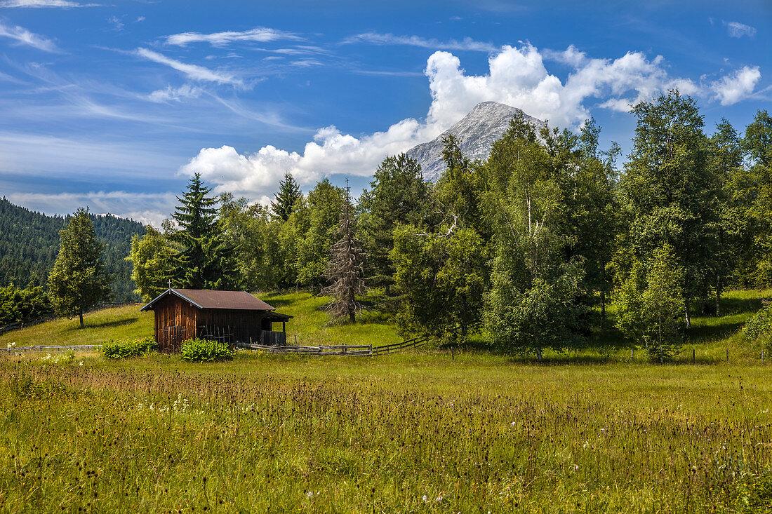 Moorwiese bei Seefeld in Tirol, Tirol, Österreich