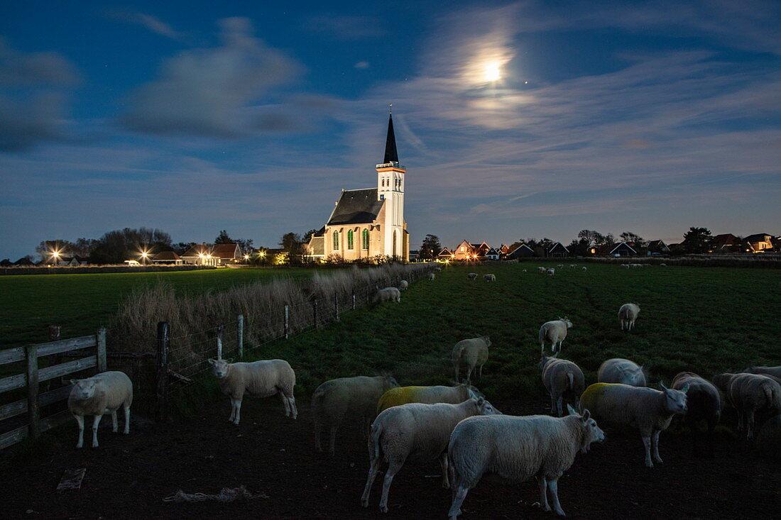 Moon rise over sheep in paddock with illuminated church Kerk Den Hoorn behind, Den Hoorn, Texel, West Frisian Islands, Friesland, Netherlands, Europe