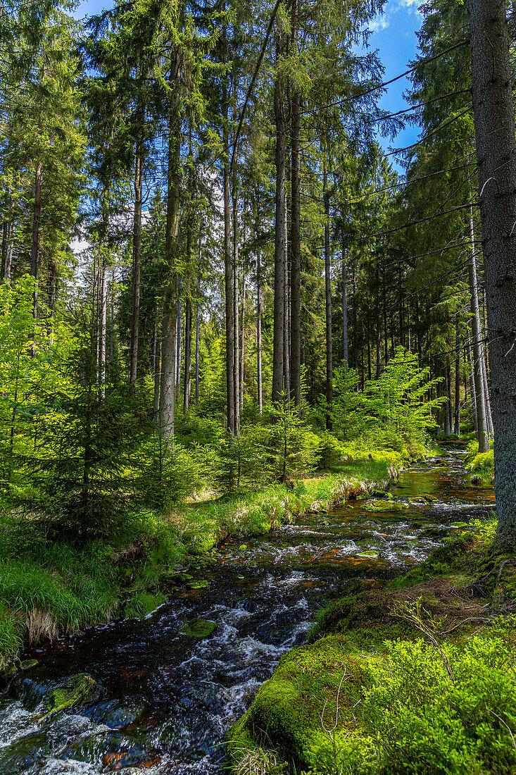 River Weißer Main near Bischofsgrün in the Fichtelgebirge, Upper Franconia, Bavaria, Germany