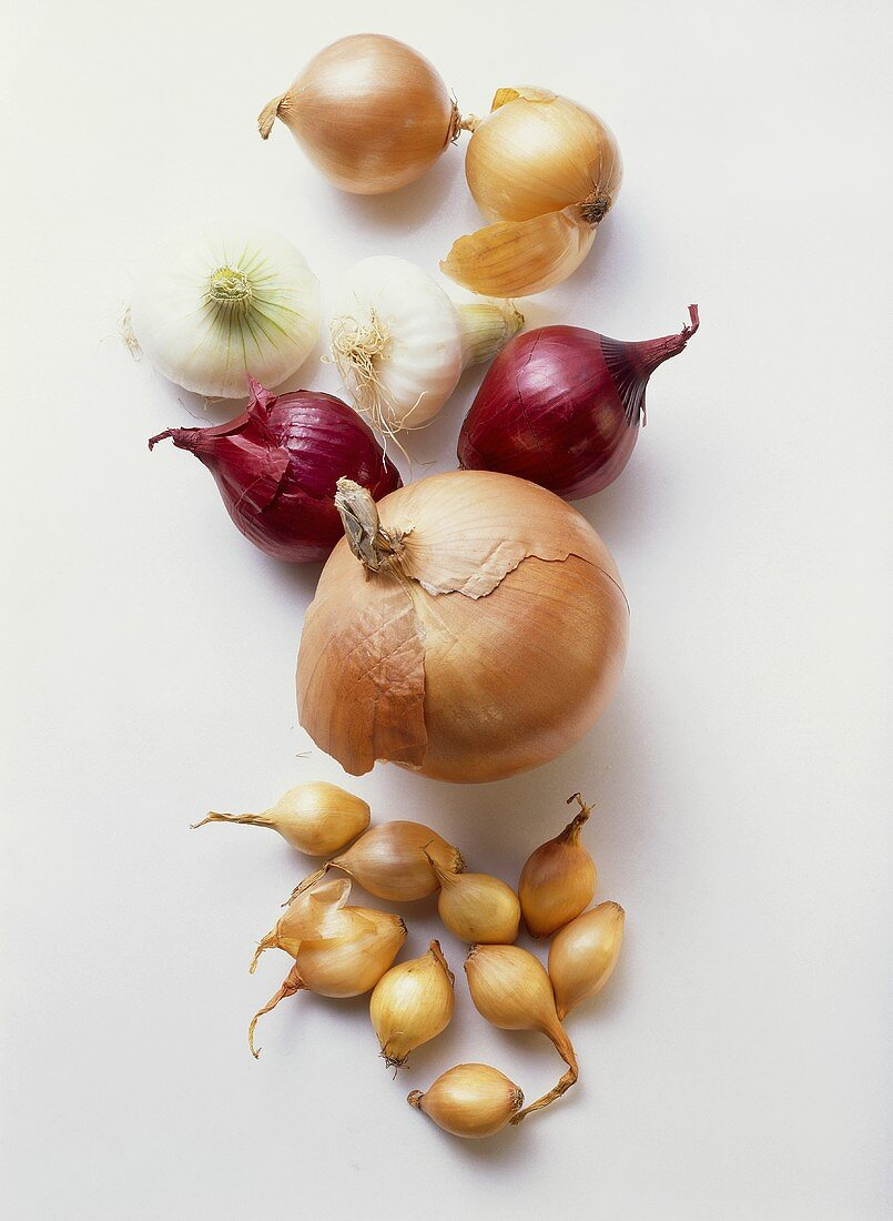 Various types of onion