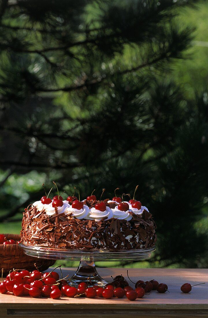 Black Forest cherry gateau on cake stand, outdoors
