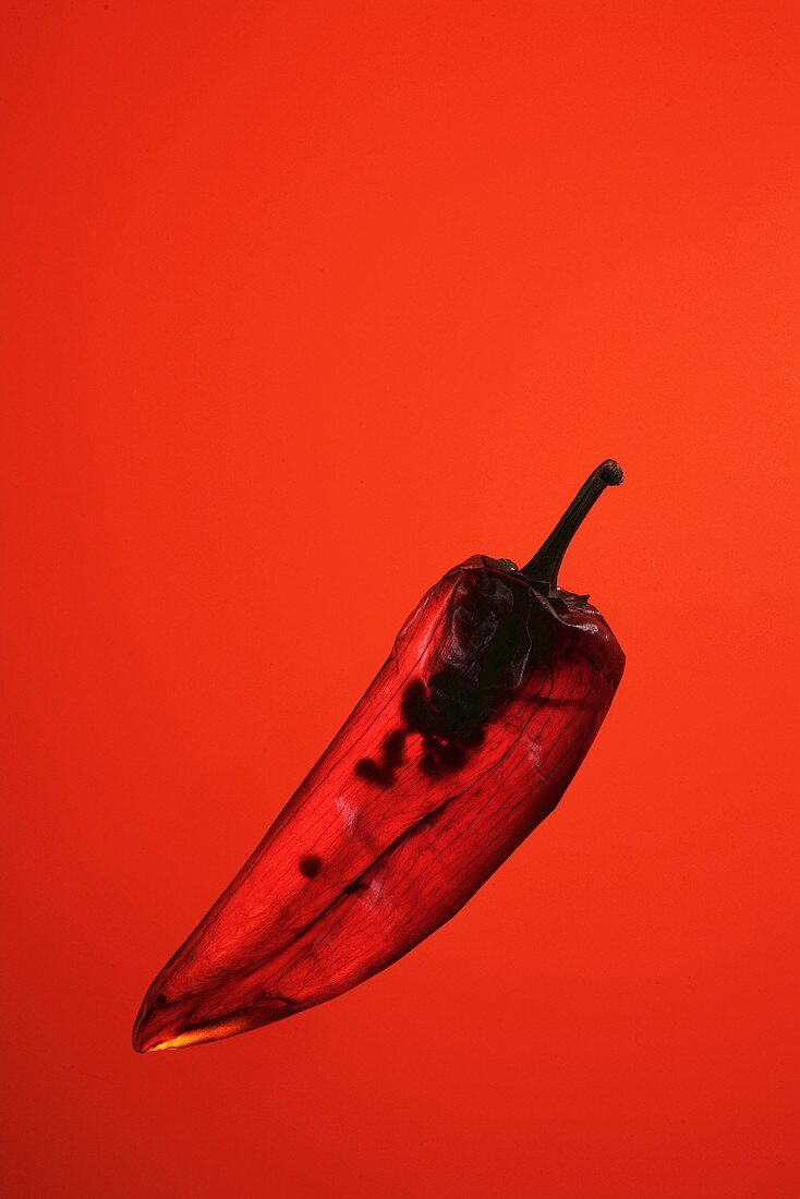 A chilli pepper against a red background