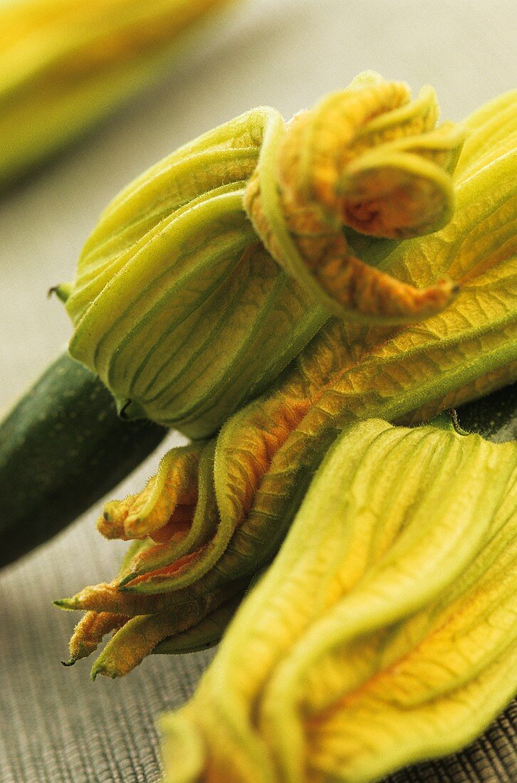 Courgette with flowers (close-up)