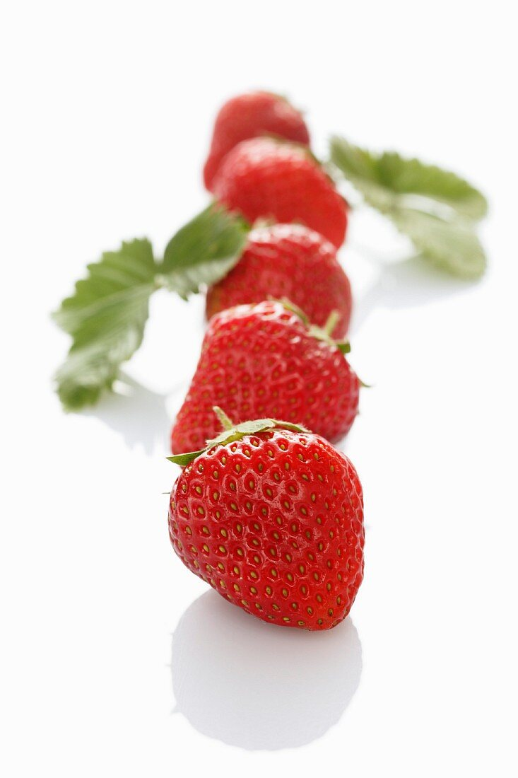 A row of strawberries with leaves