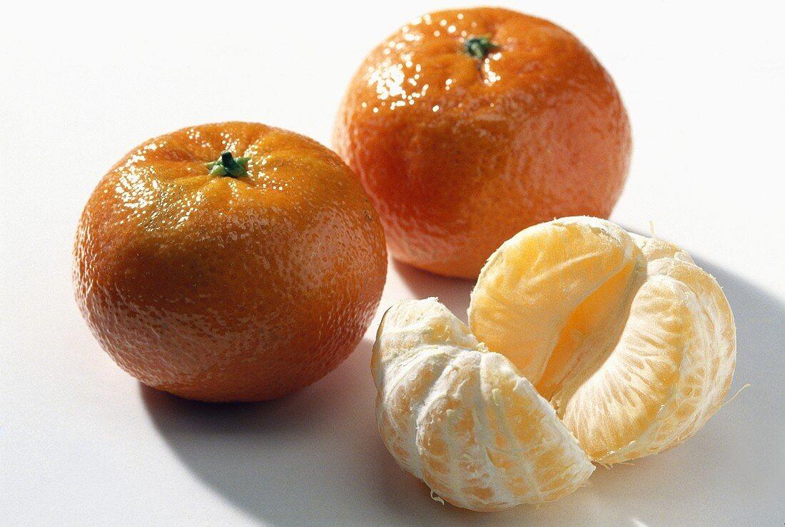 Clementine Late; cross: mandarin & bitter orange (Spain)