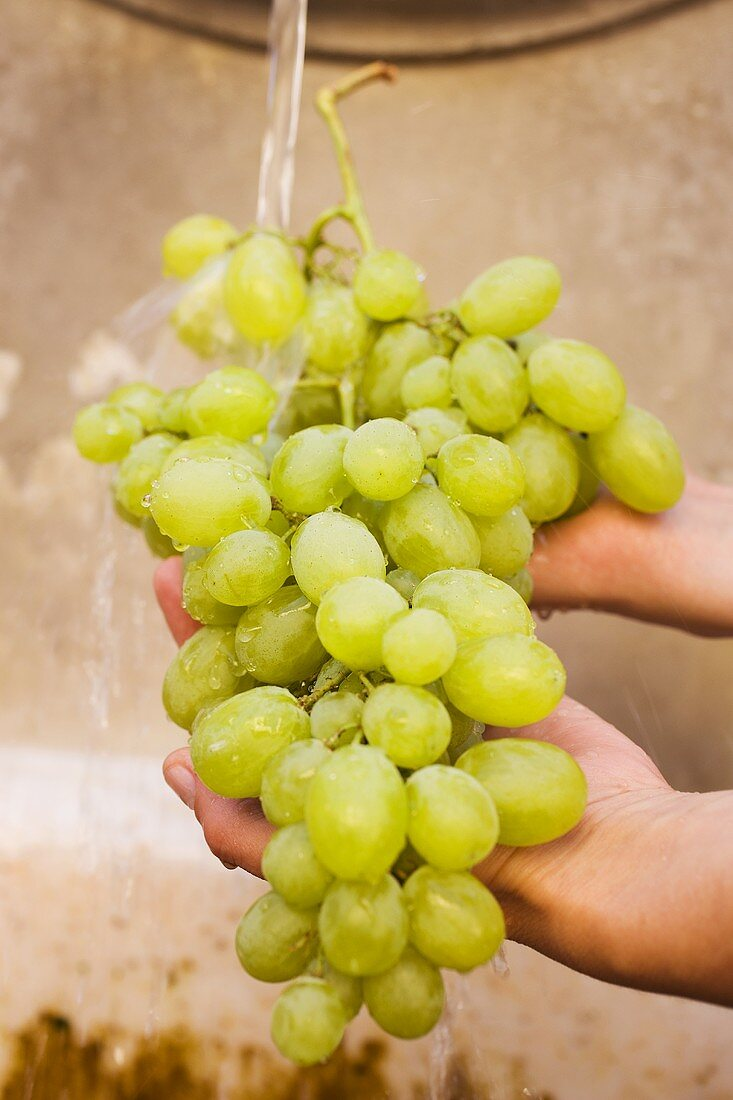 Hands holding green grapes under running water