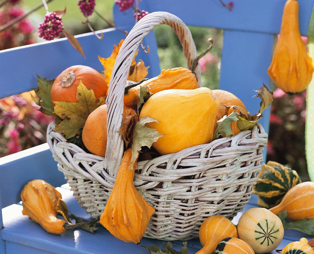 Ornamental gourds in wicker basket