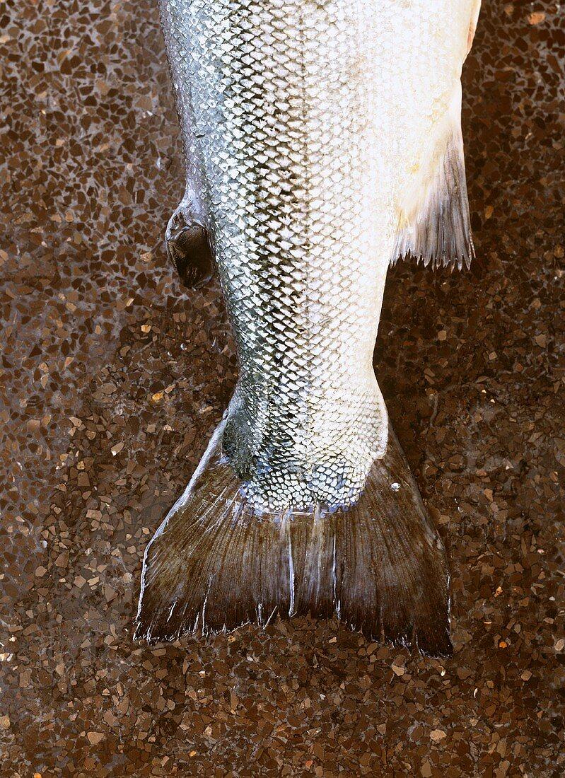 Salmon tail fin