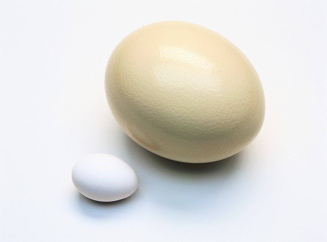 Ostrich egg and hen's egg
