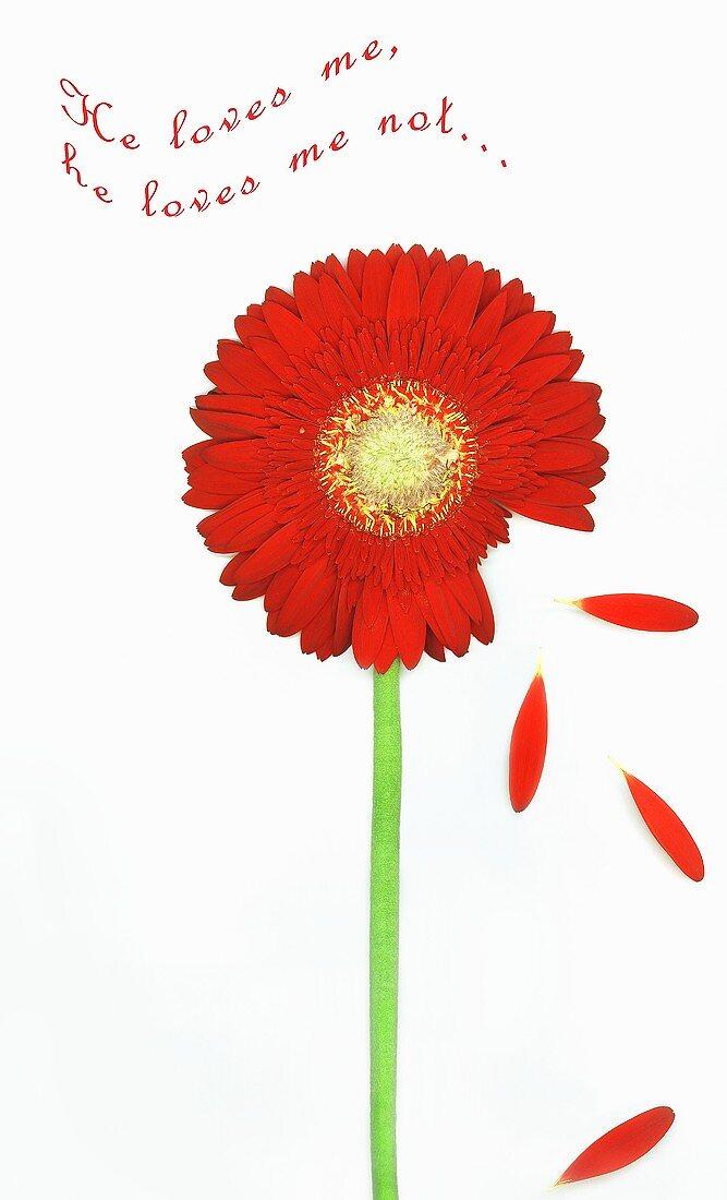 Greetings card with red Gerbera