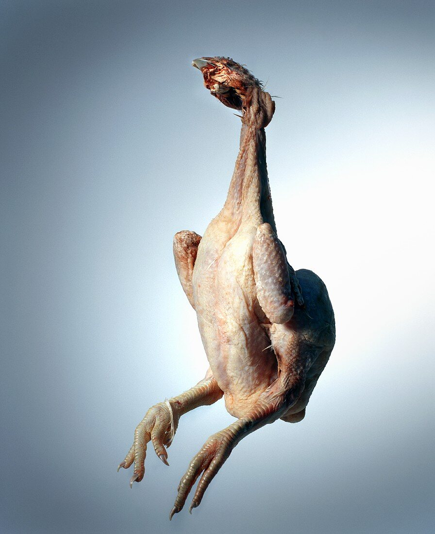 Plucked chicken with head