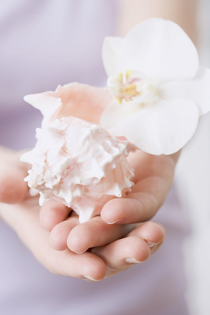 Hands holding shell and orchid