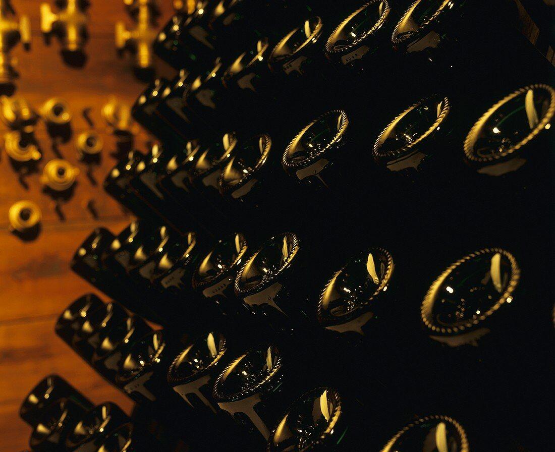 Champagne bottles in a pupitre (riddling rack)