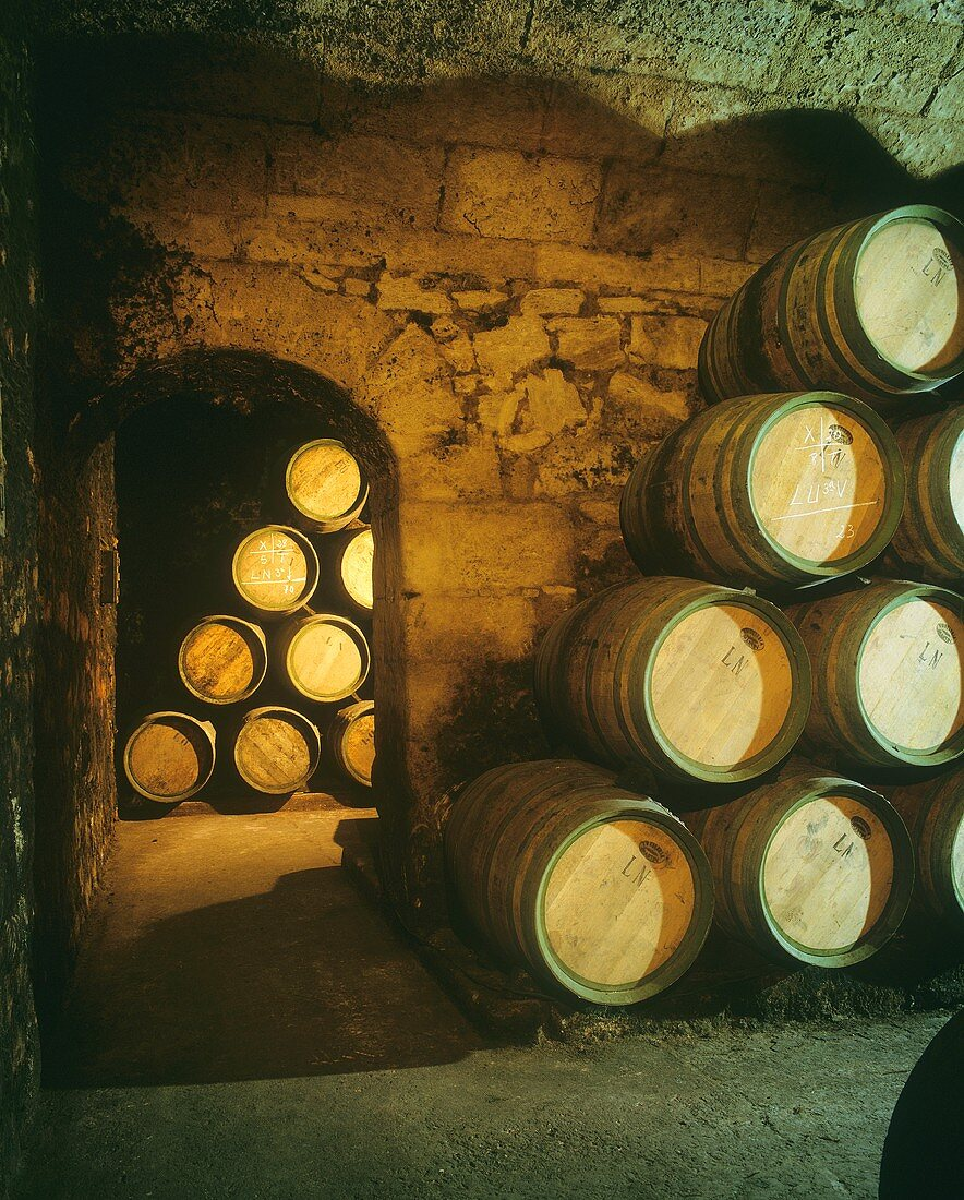 Barrel cellar of Marques de Riscal Estate, Elciego, Rioja, Spain