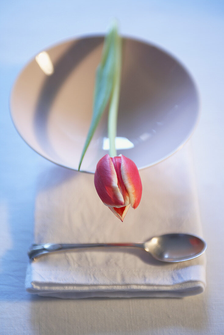 Table decoration: a single tulip