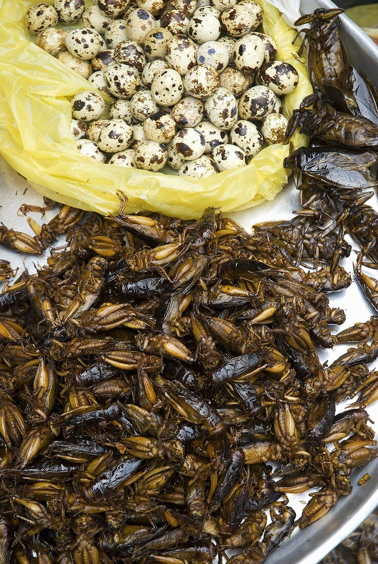 Grasshoppers, cockroaches & quails' eggs on market stall, Thailand