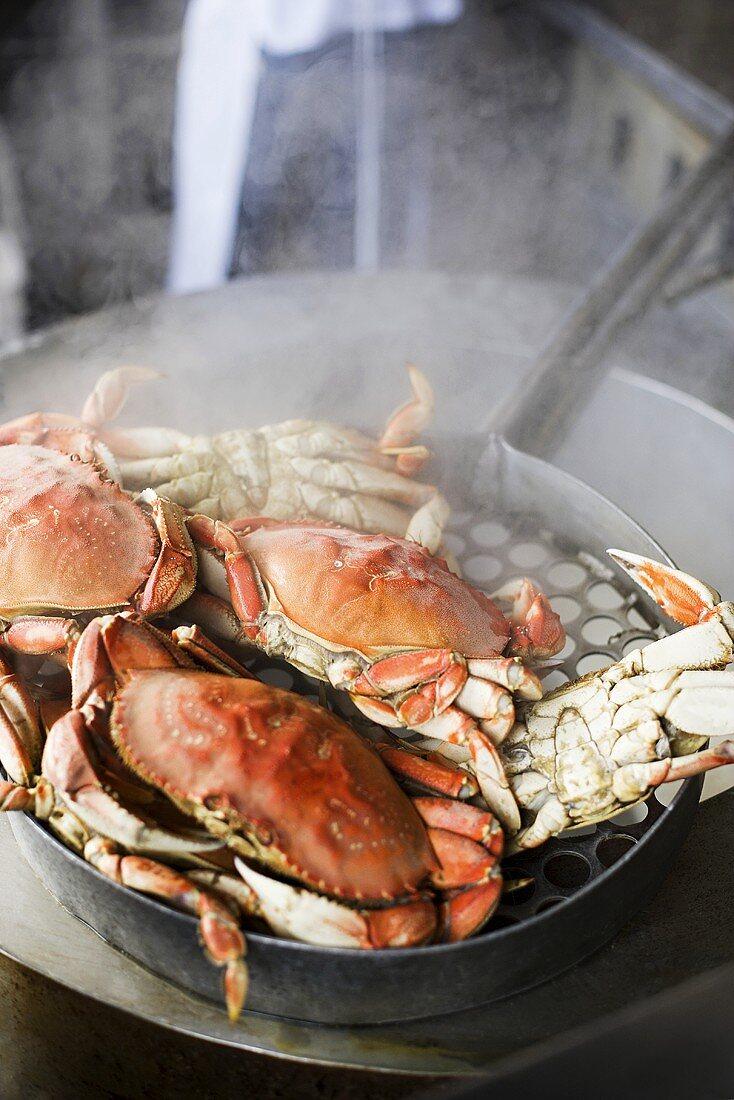 Crabs cooking