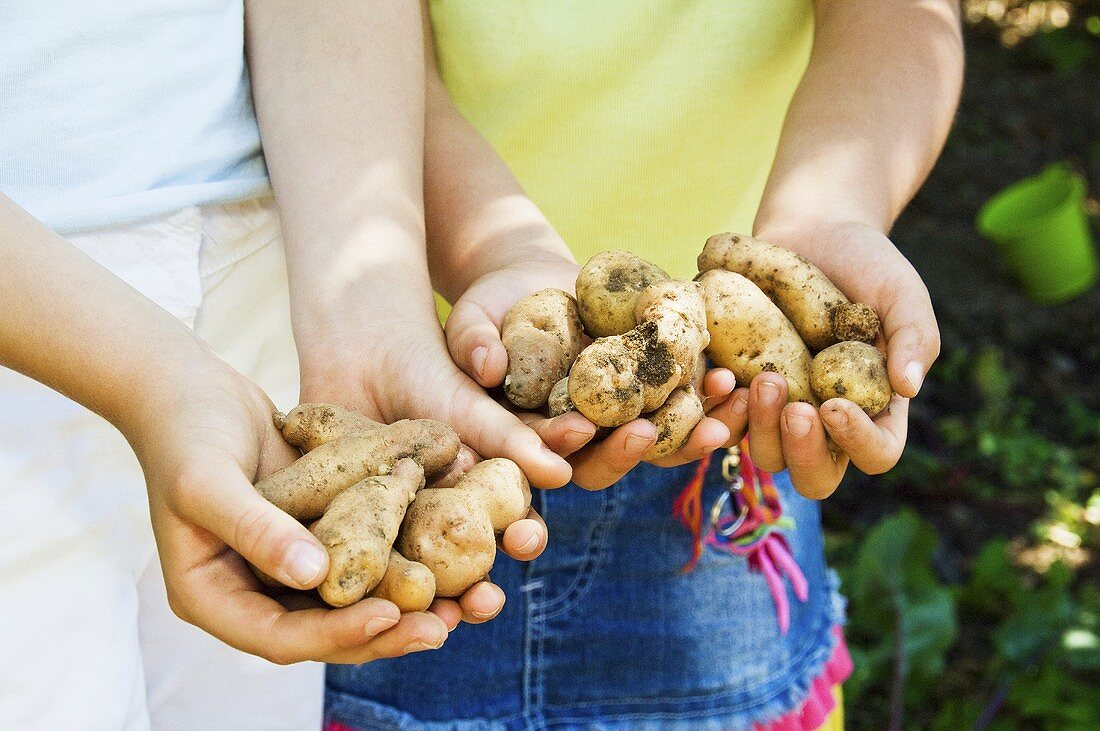 Children holding potatoes