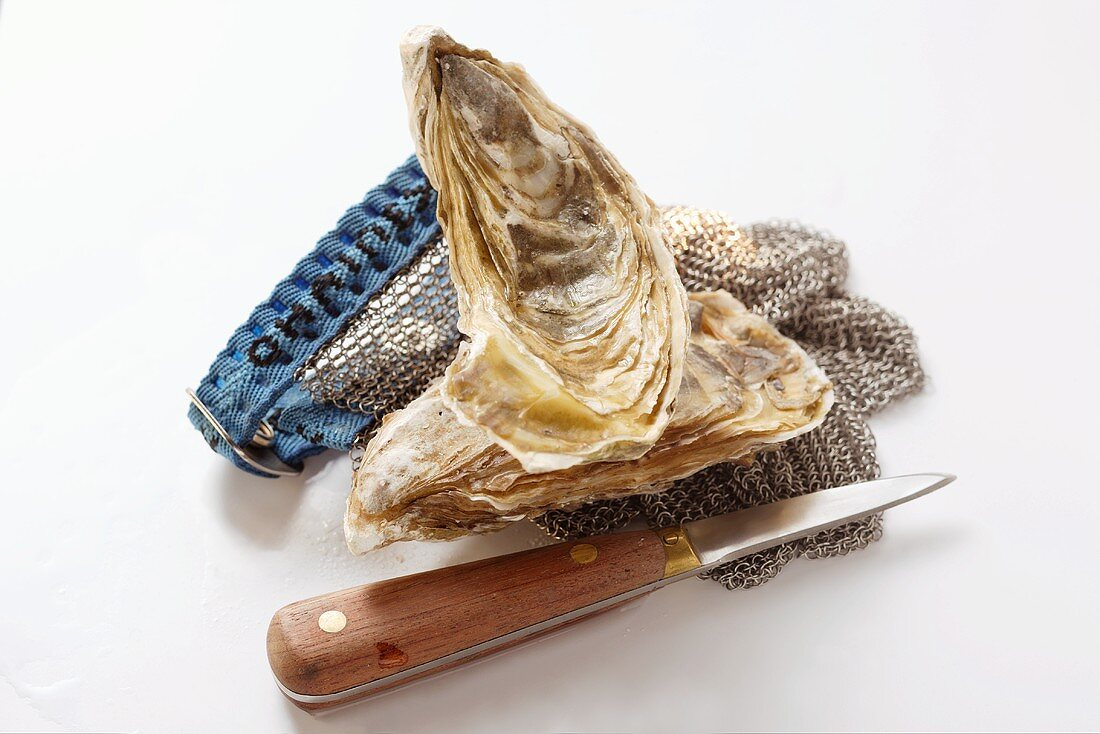 Fresh oysters, oyster knife and oyster glove