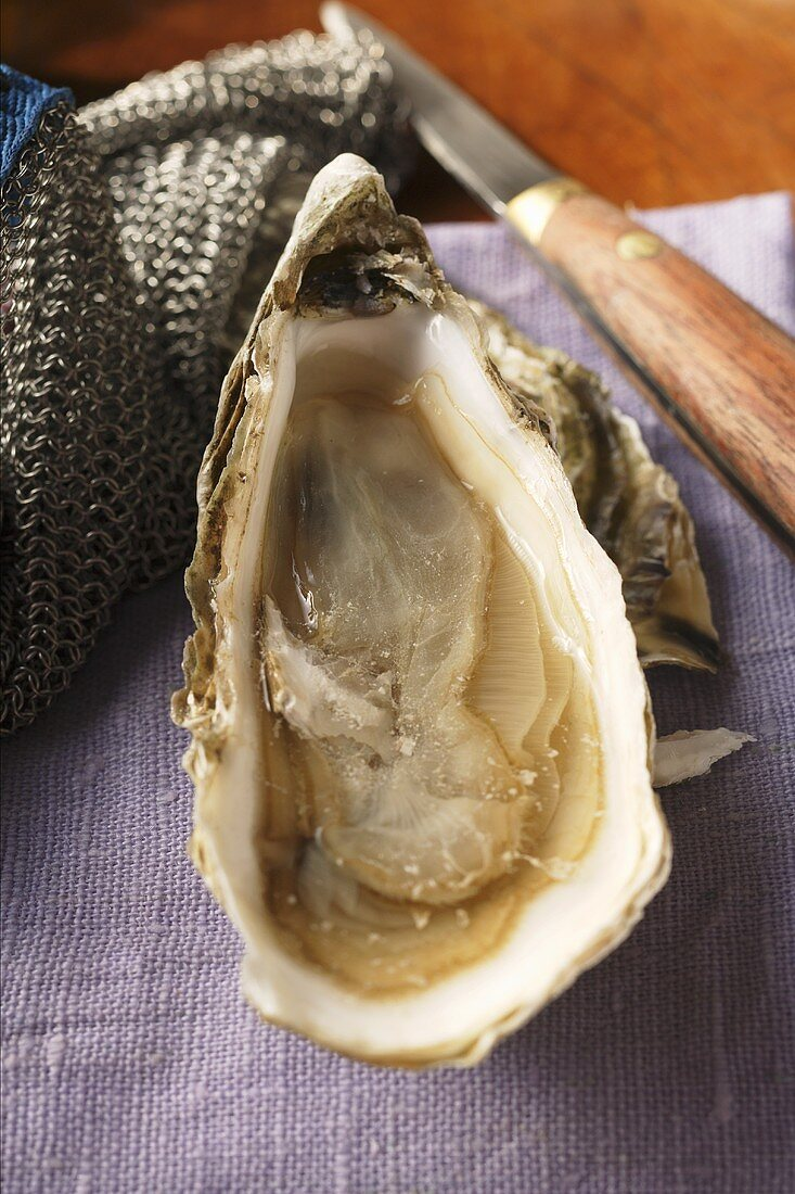Fresh oyster on purple cloth; knife; oyster glove