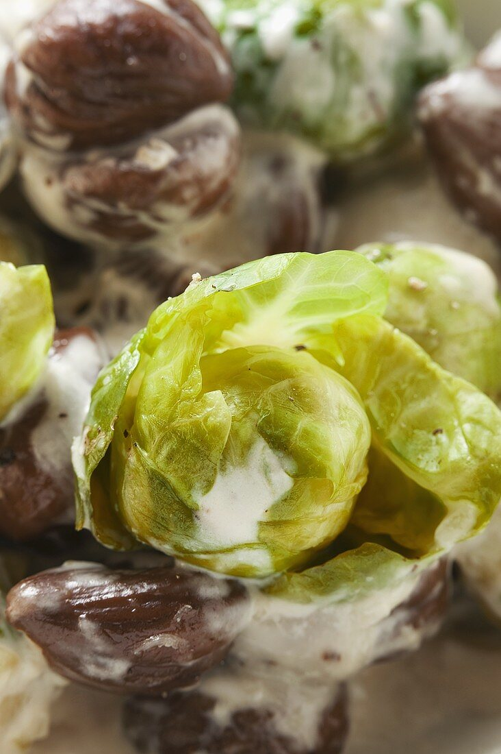 Brussels sprouts with chestnuts and cream sauce (close-up)