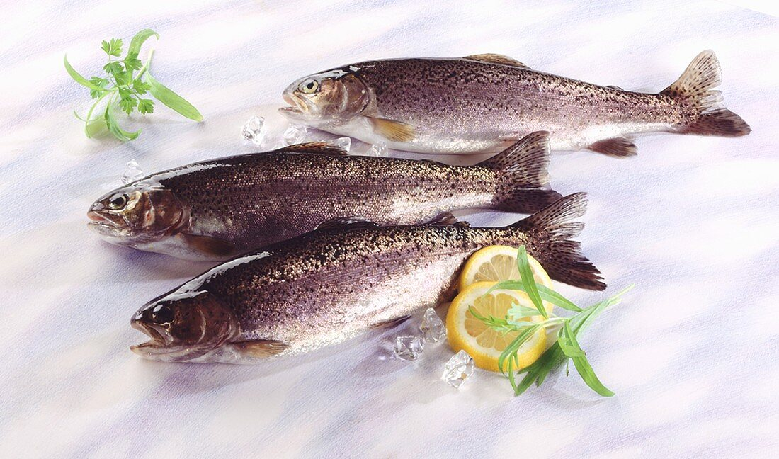 Three brook trout with herbs, lemon slices and ice