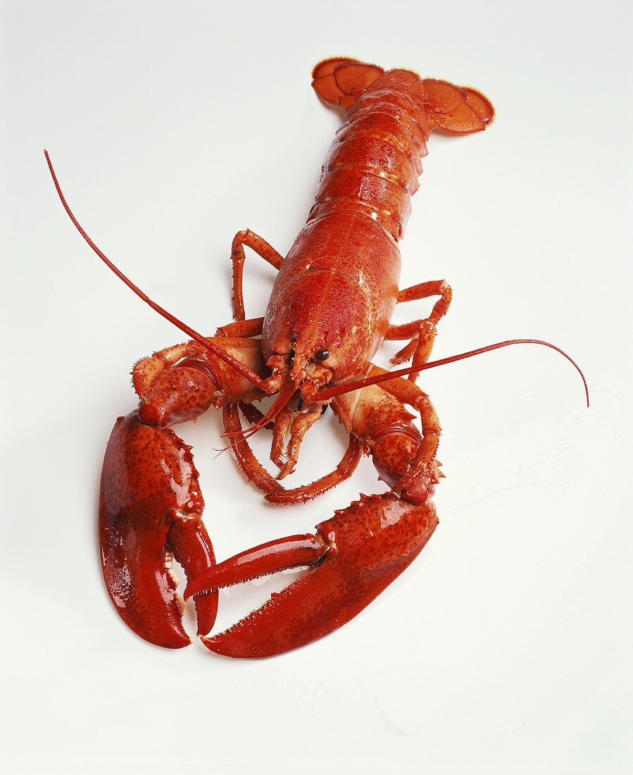 A boiled lobster