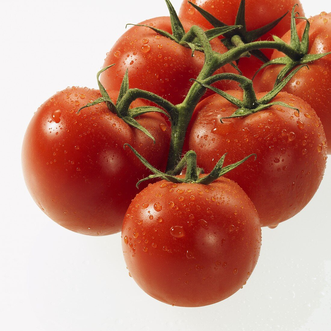 Tomatoes on the vine with drops of water