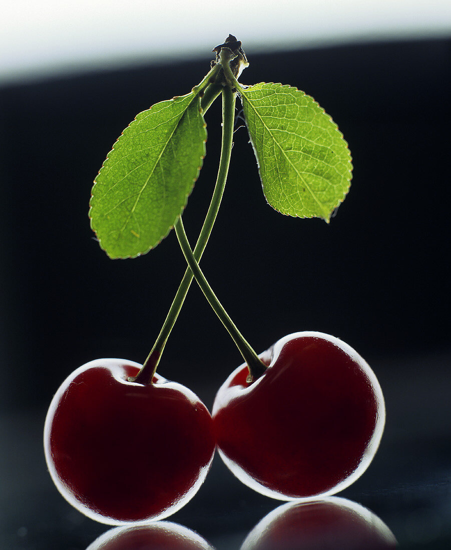 Two cherries with stalk and leaves