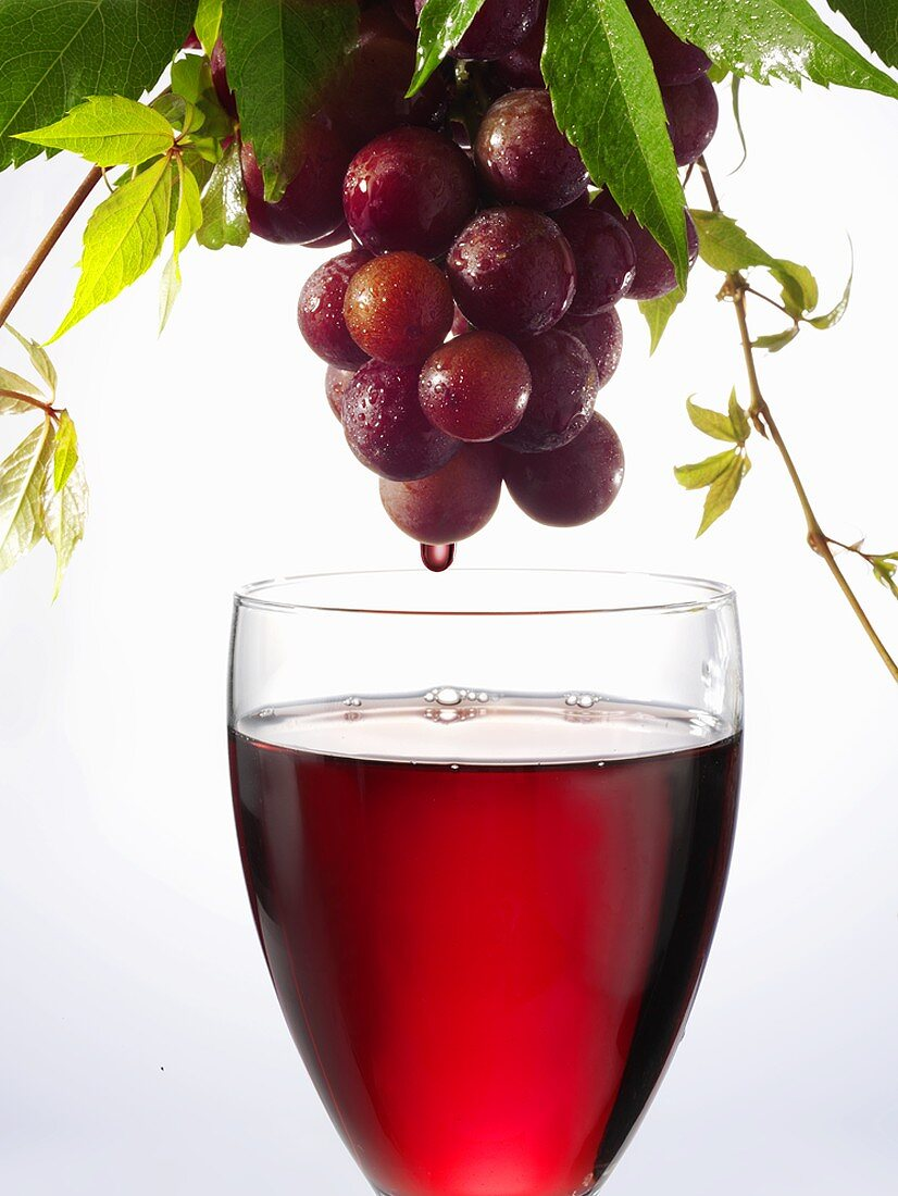 Red wine dripping from grapes into a wine glass