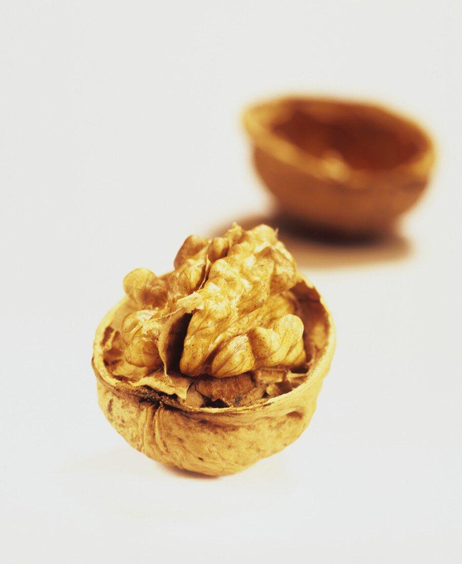 Walnut in its shell