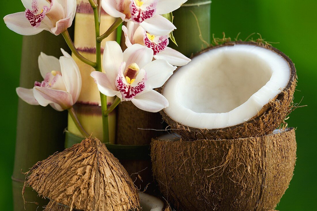 Coconut with orchids and bamboo canes