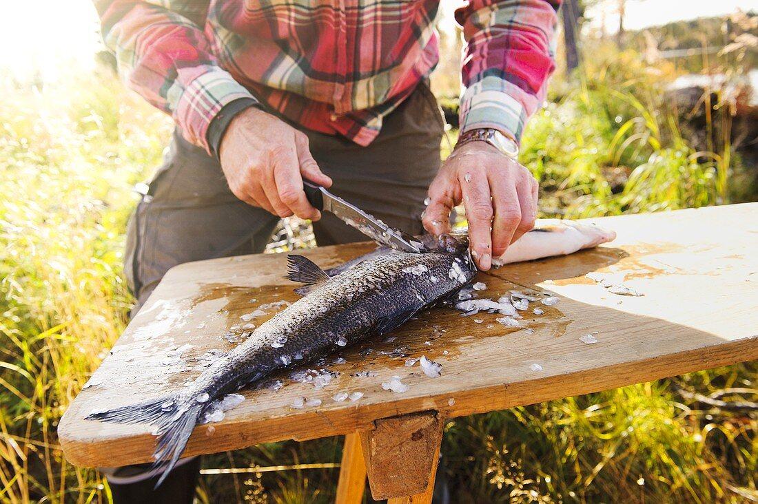 A man gutting a fish