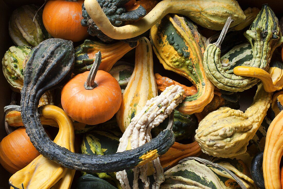 Various Gourds From Farmer's Market in New Jersey
