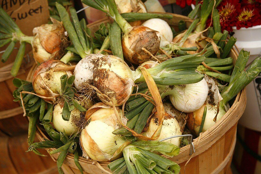 Organic Sugar Onions in Wooden Basket at Farmer's Market