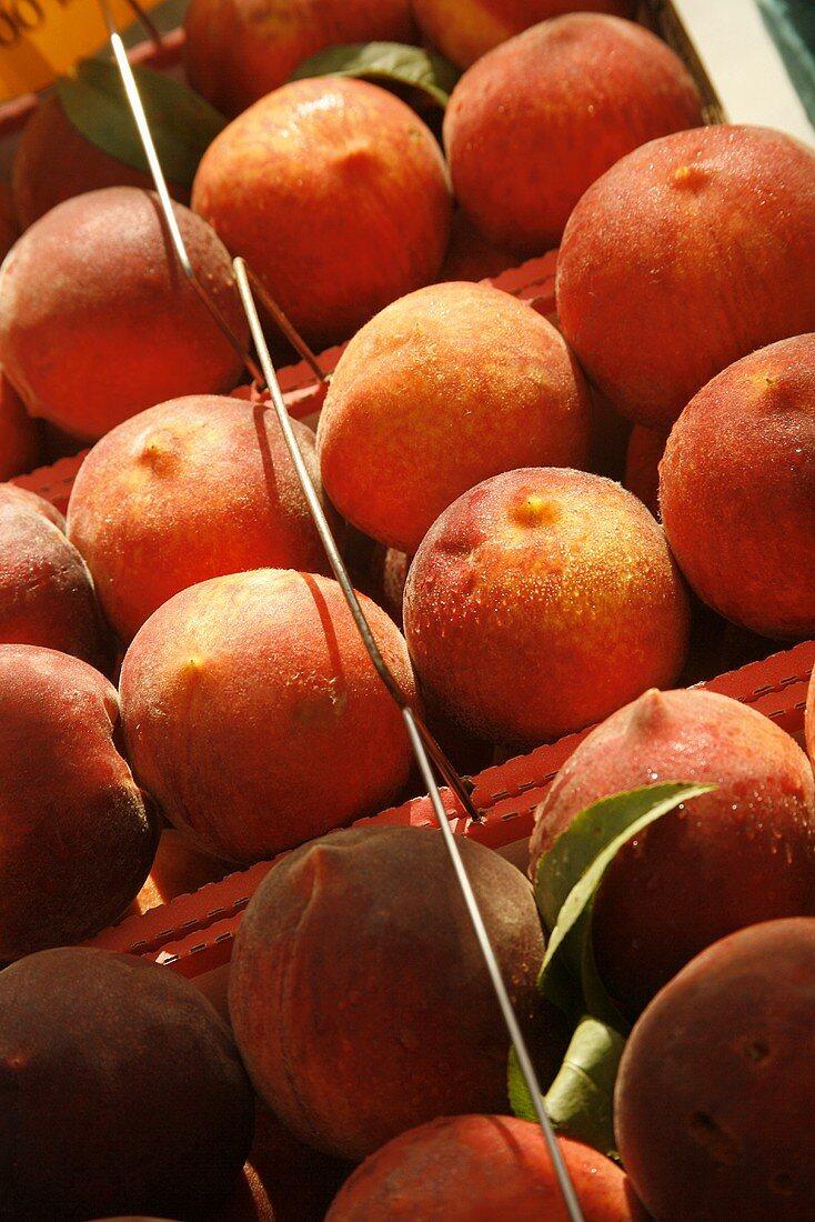 Organic Peaches on Display at Farmer's Market