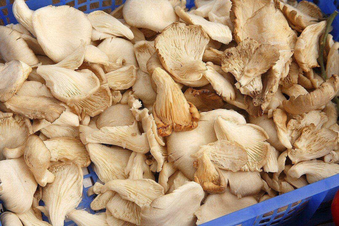 Oyster Mushrooms on Display at Farmer's Market in Bantry, Ireland