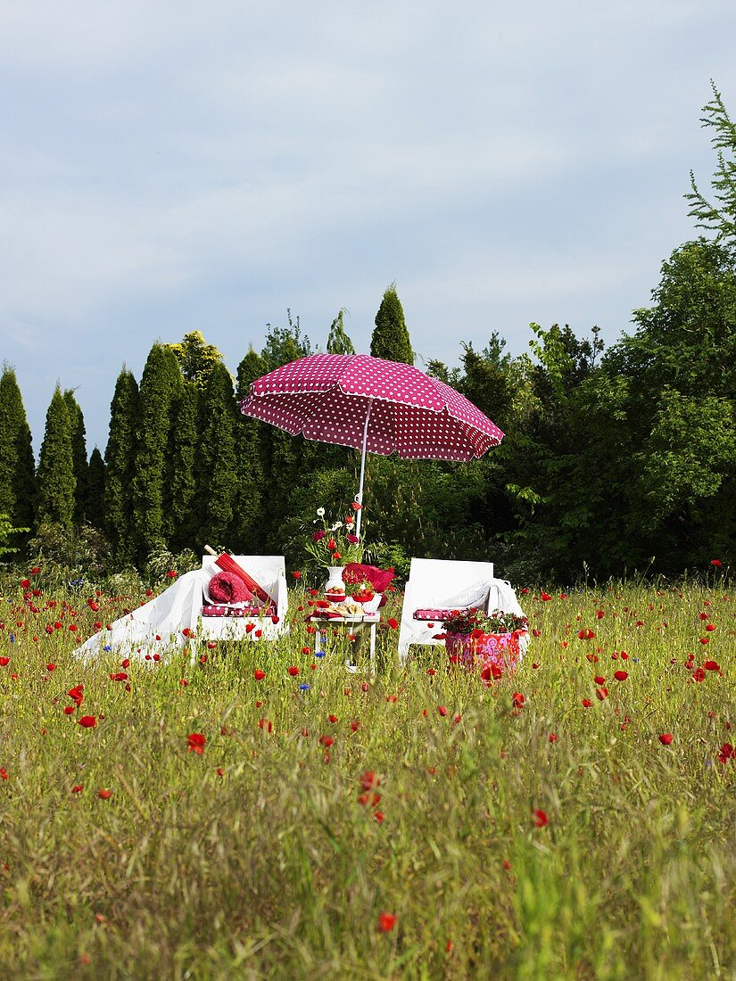 Field of corn poppies with chairs and a sun umbrella