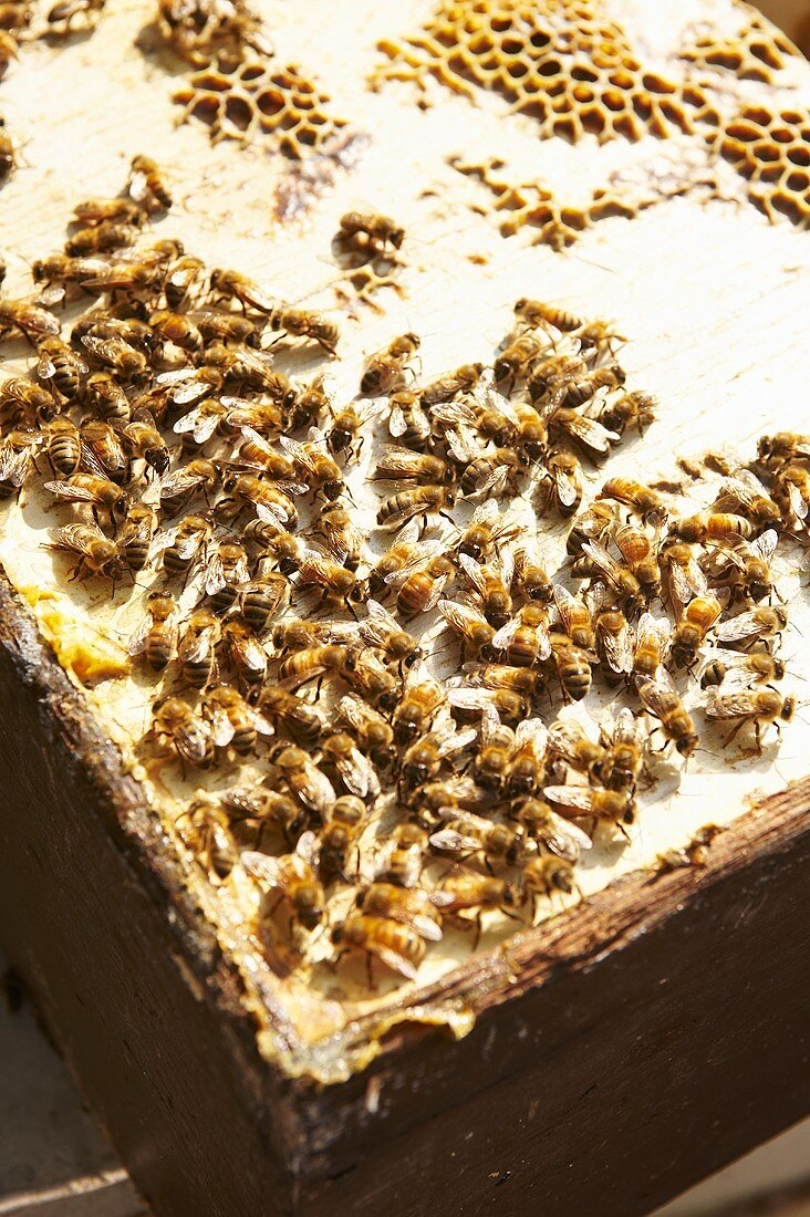 Bees on Hive Cover
