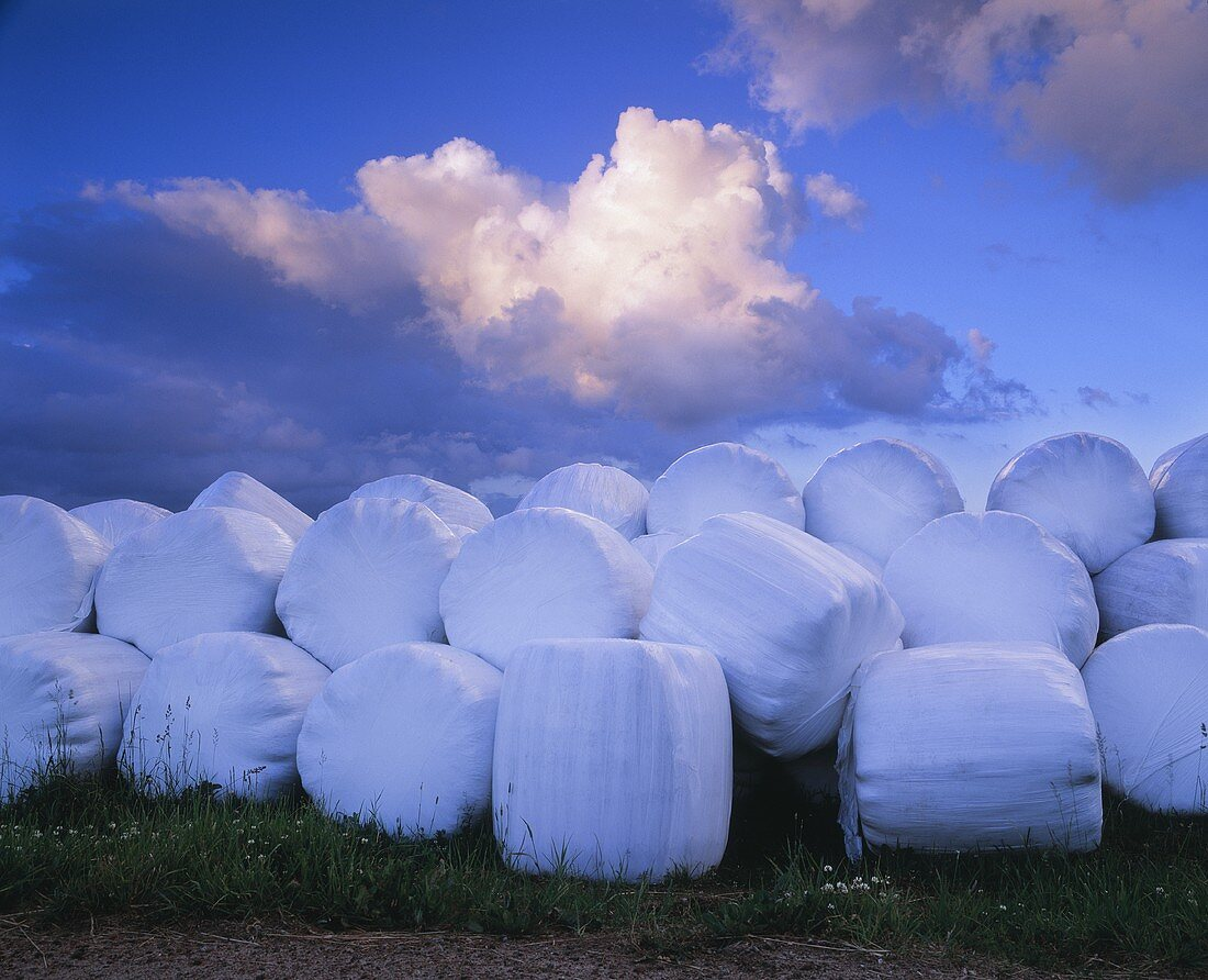 Bales of hay wrapped in plastic on a field after harvest