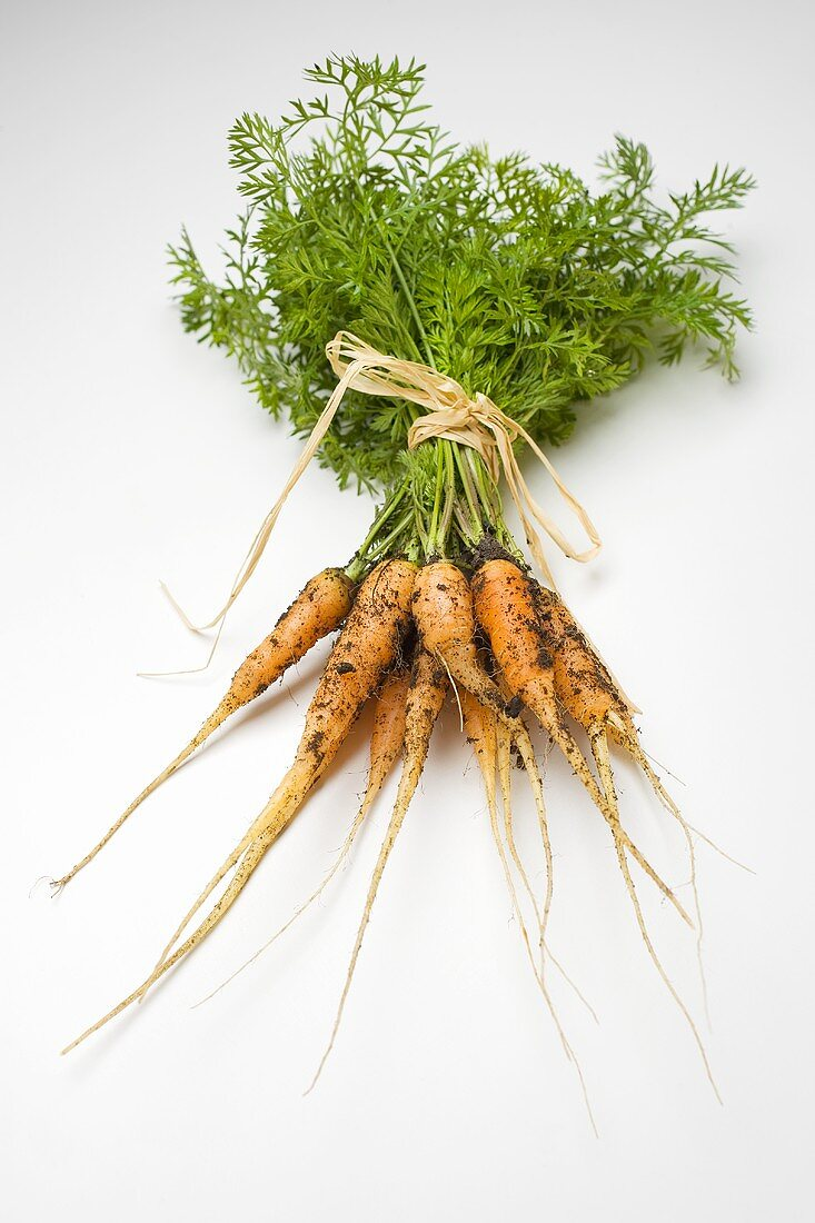A bunch of young carrots with soil
