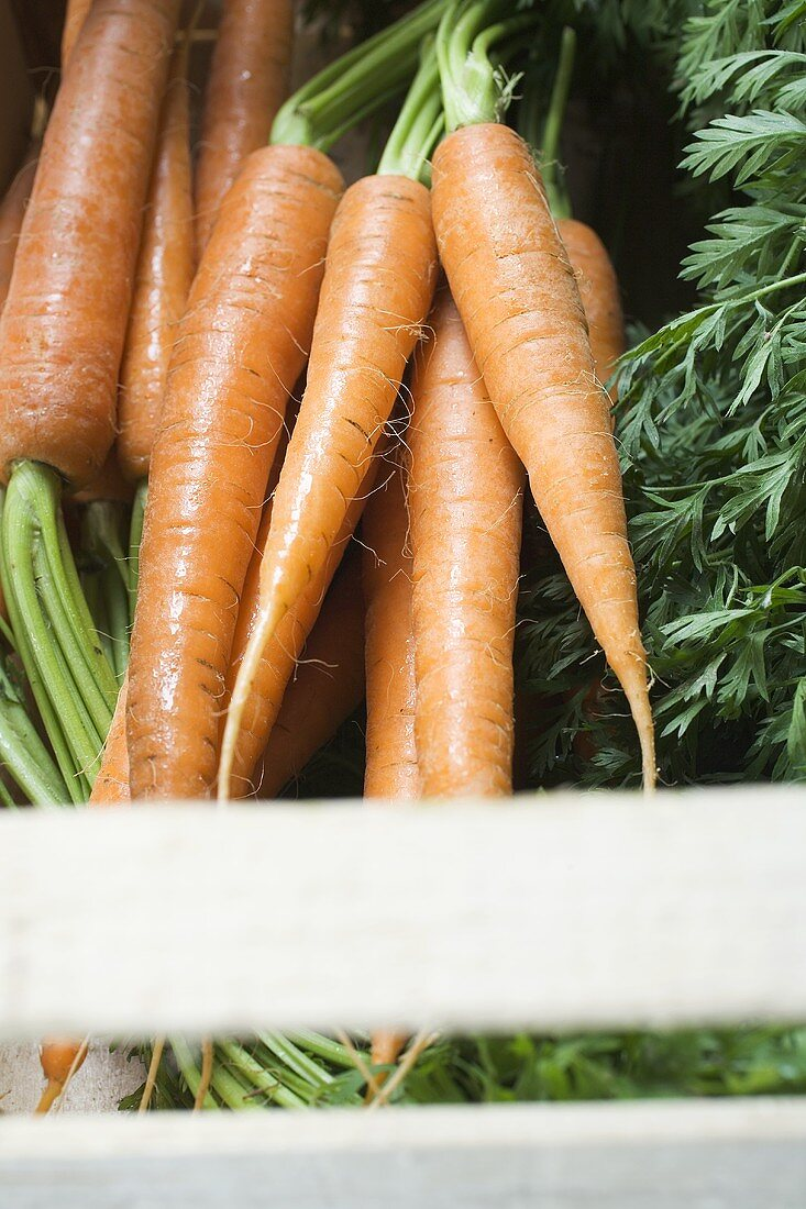 Fresh carrots in crate